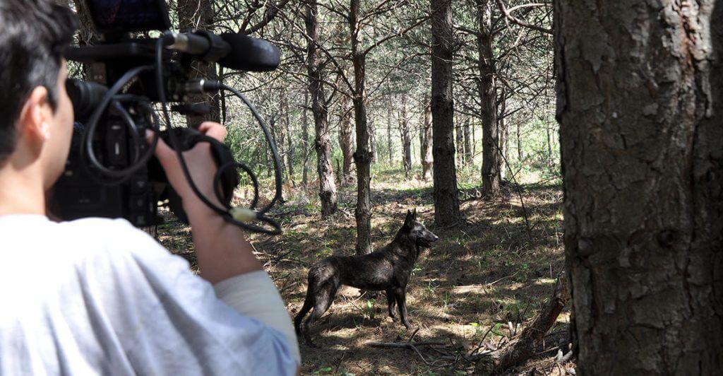 Σκύλος ηθοποιός εκπαιδευτήριο Θεσσαλονίκη Drive Unlimited.gr