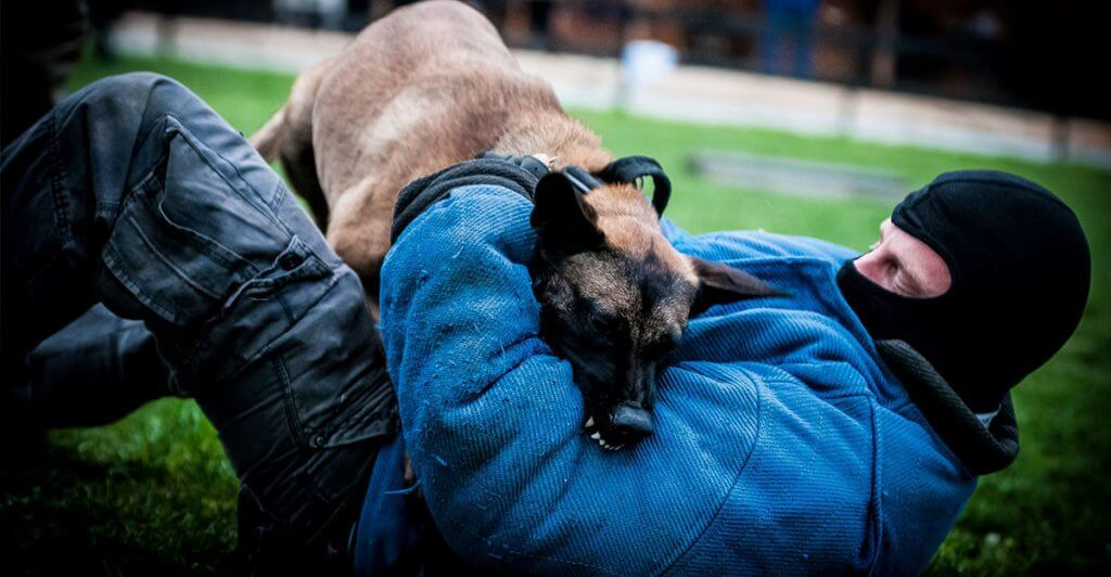 Εκπαίδευση σκύλων προστασίας θεσσαλονίκη DriveUnlimited.gr