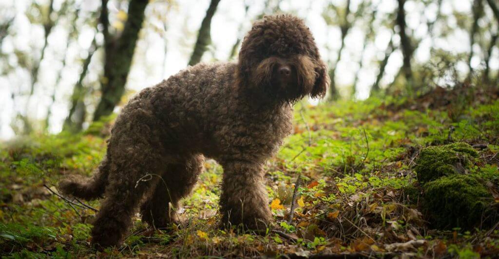 εκπαίδευση σκύλου για τρούφα θεσσαλονίκη
